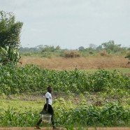 80% – 140%  Income Growth : It's Possible for Smallholder Farmers